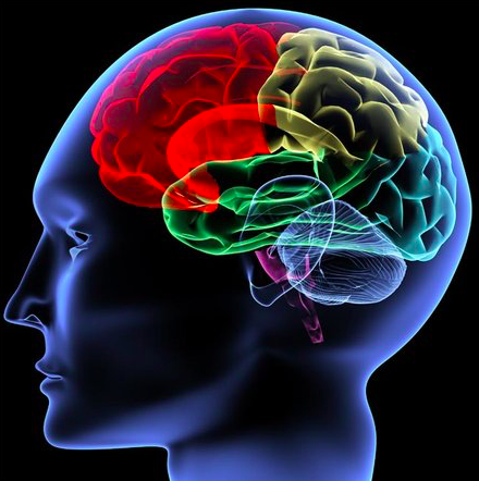 Zmogaus smegenys